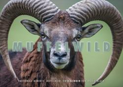 Kalender Muffelwild