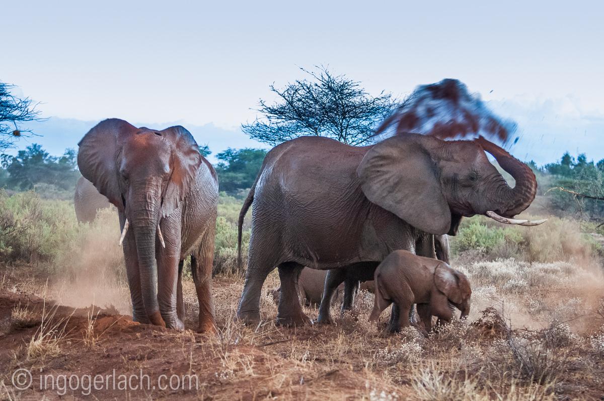 Elefanten im Regen_IGB7734