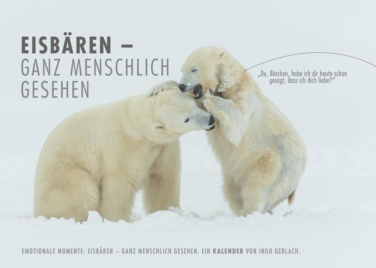 Kalender Eisbären - ganz menschlich
