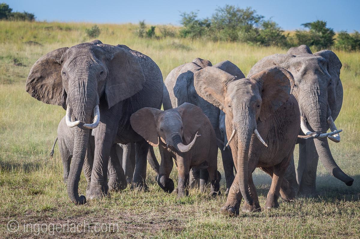 Elefanten_D4N_1548