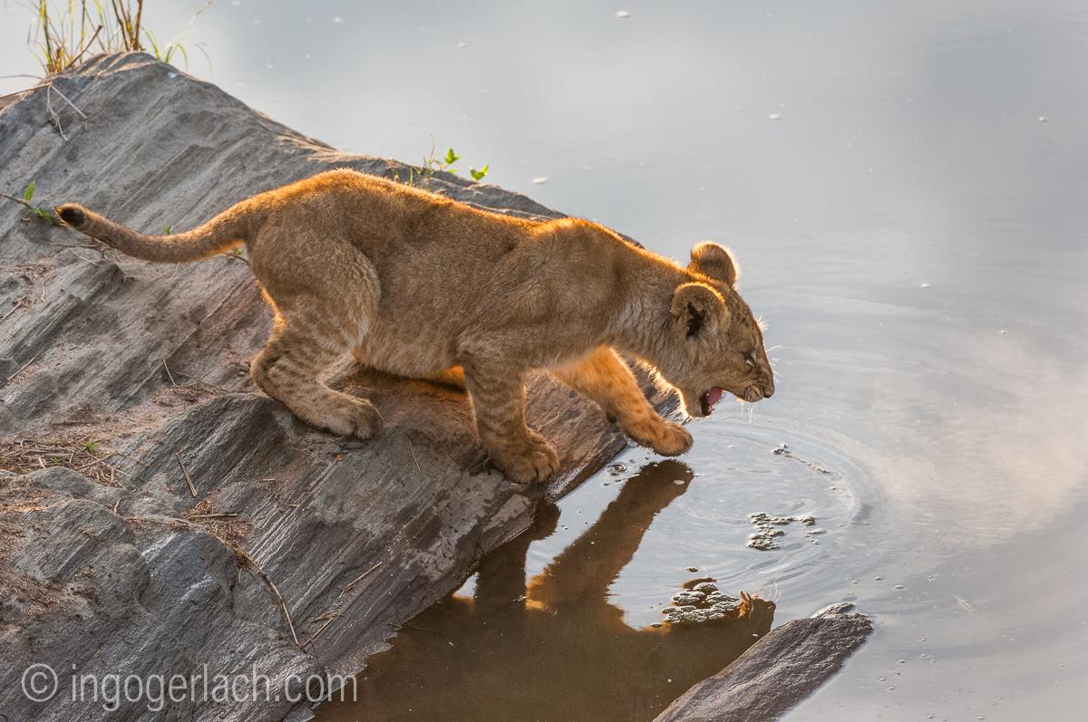 Der Mut der kleinen Löwen_IWG4463