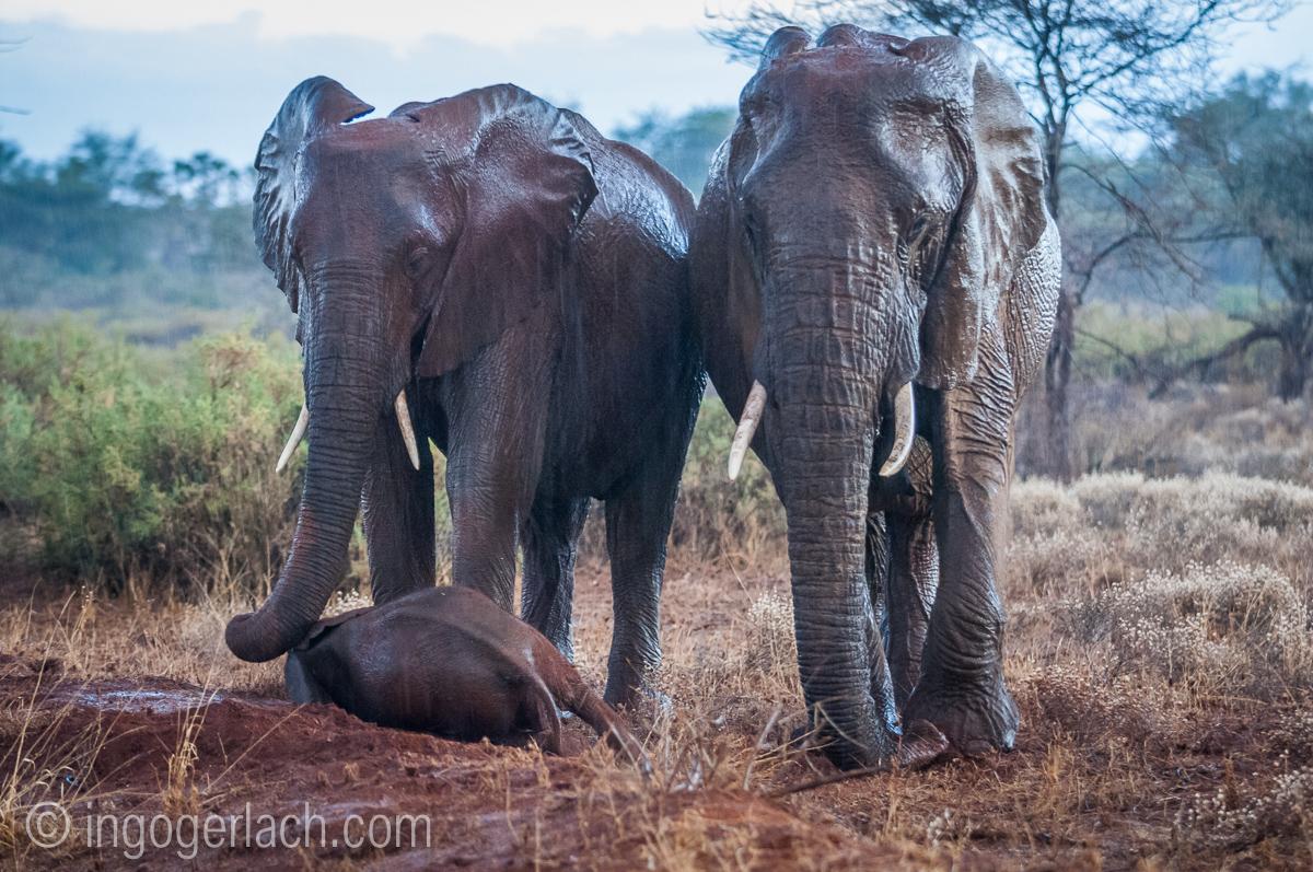 Elefanten im Regen_IGB7691