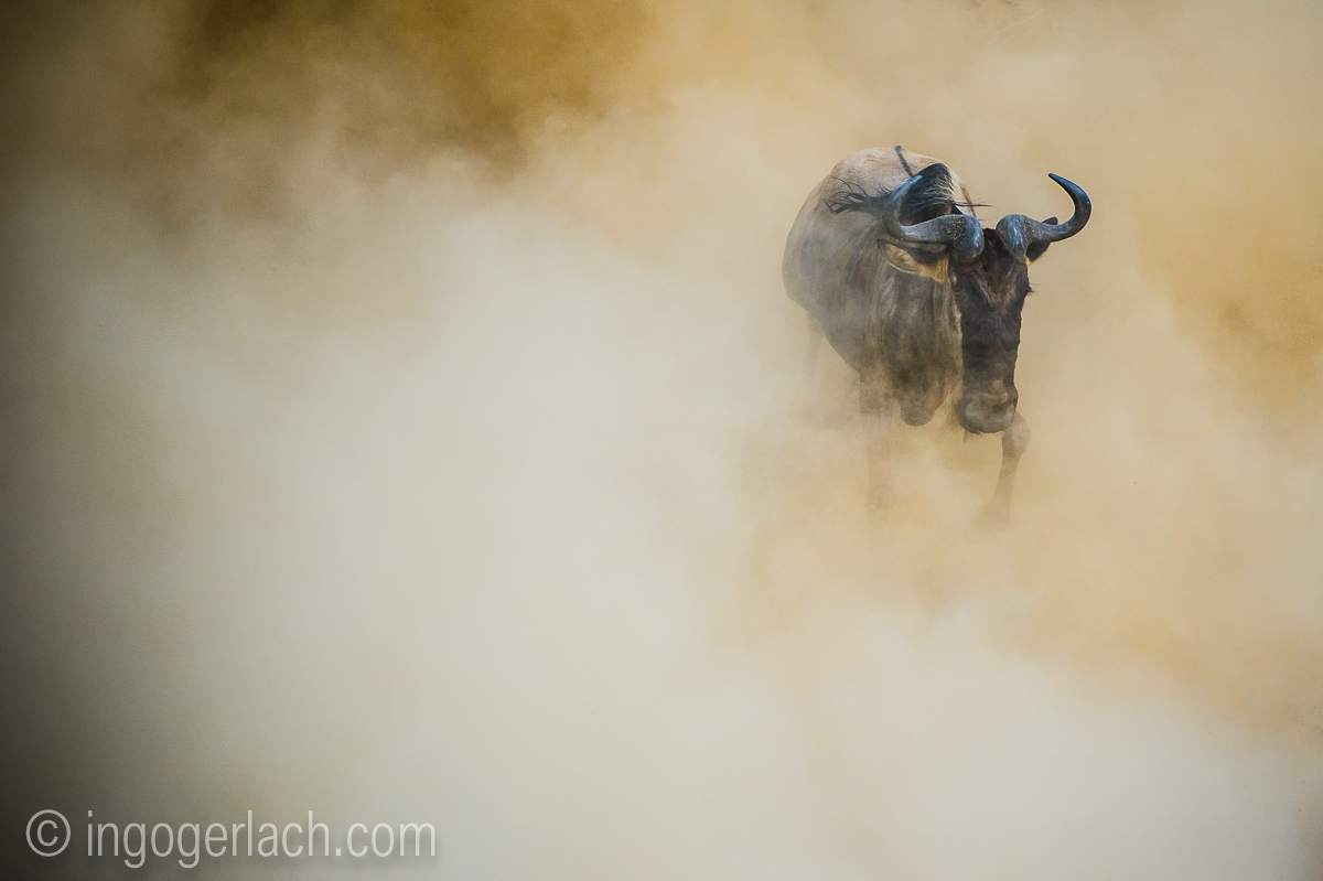 The great Migration_D3S8892