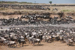 The great Migration_D3X7704