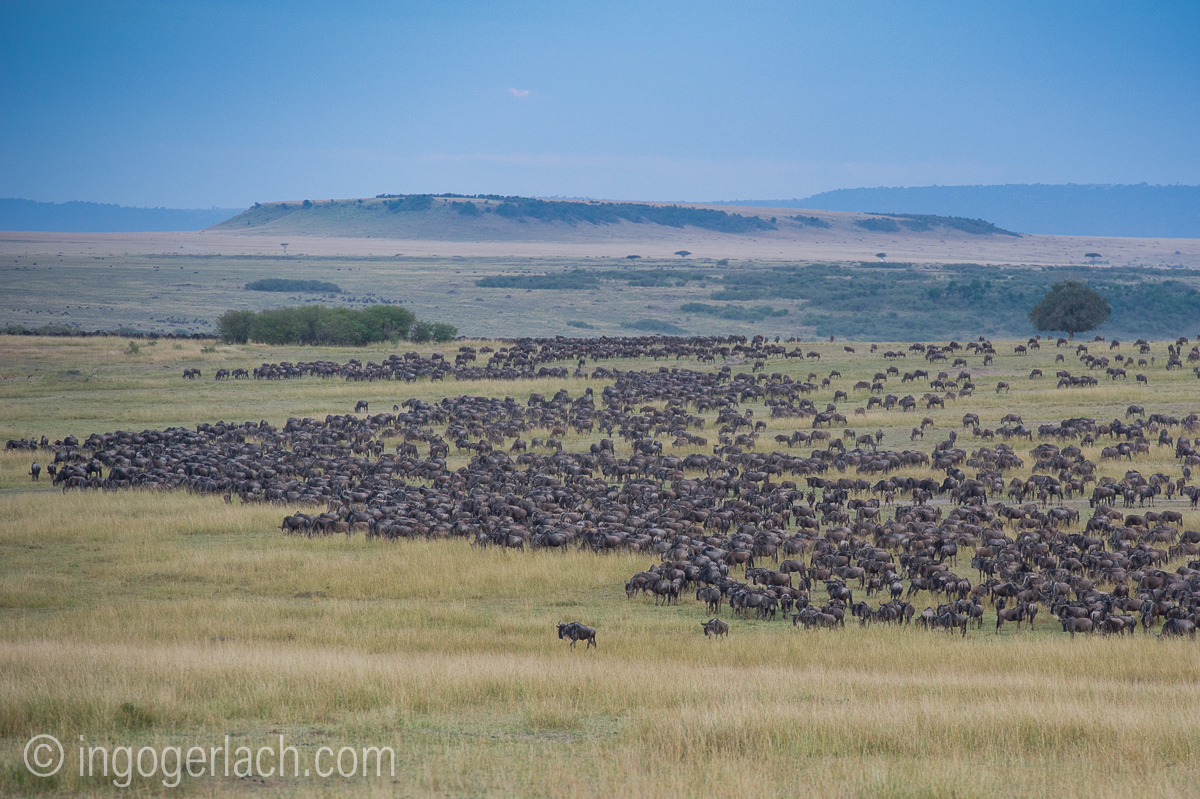 The great Migration-Bearbeitet-6