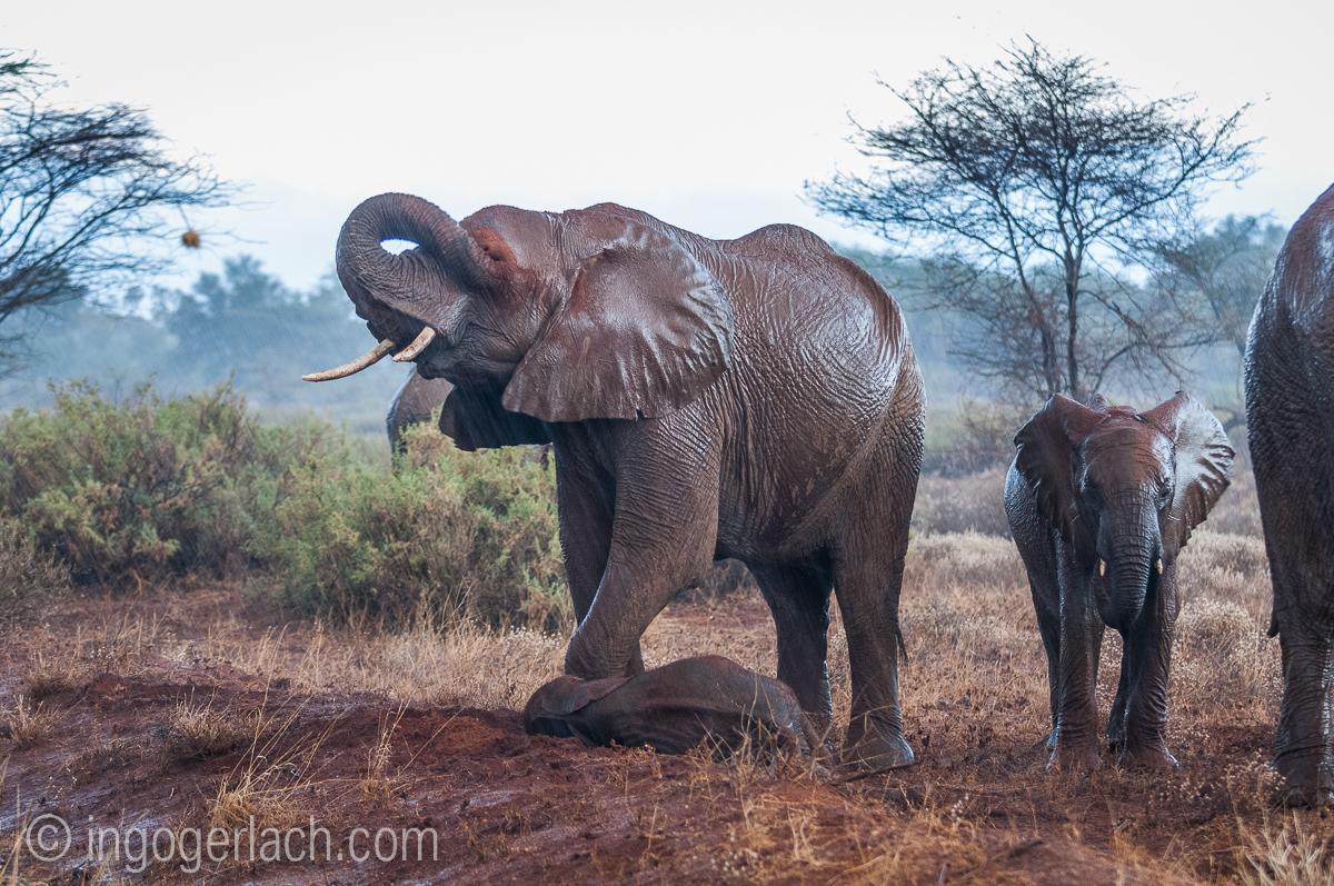 Elefanten im Regen_IGB7656
