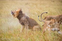 Löwen: Kampf der Giganten_D3S3949