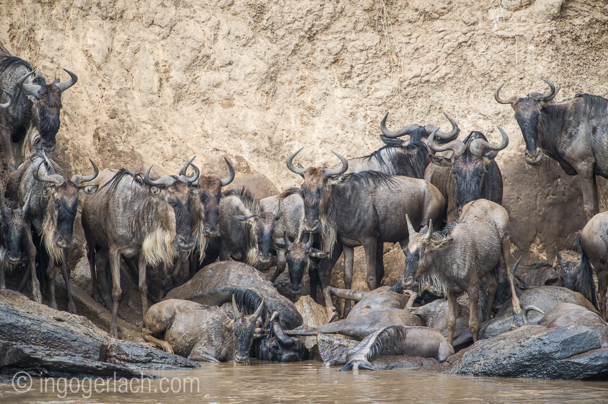 The great Migration_D3S3287