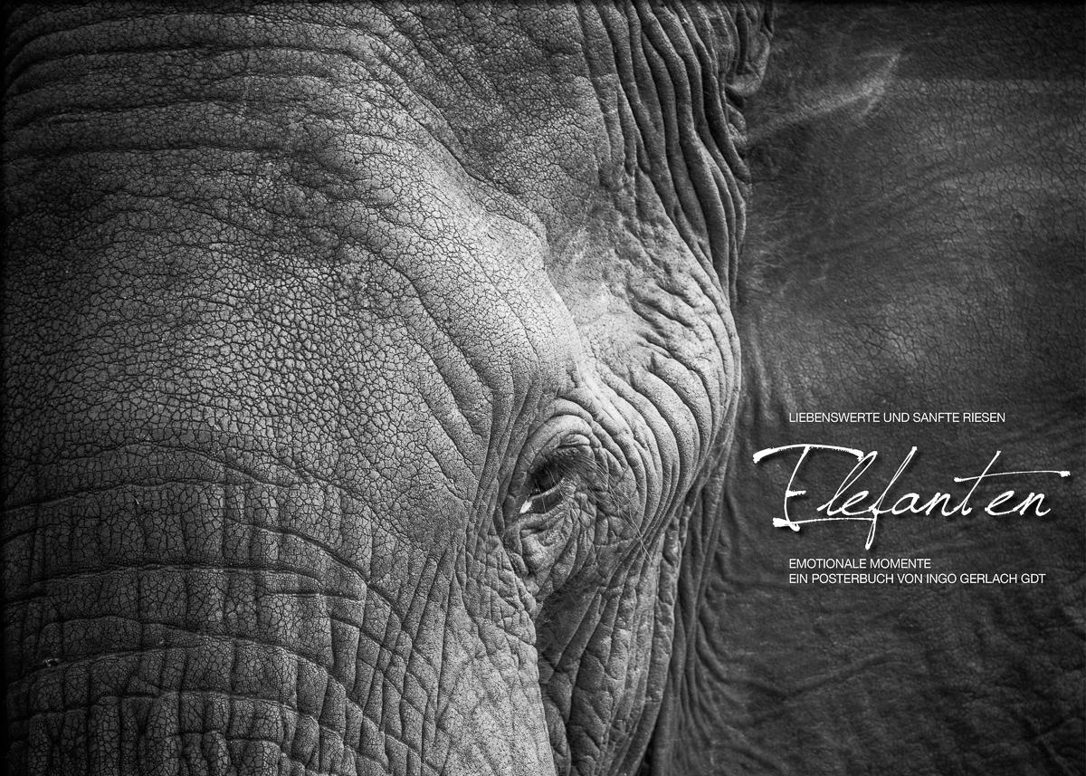 Kalender Elefanten in b+w