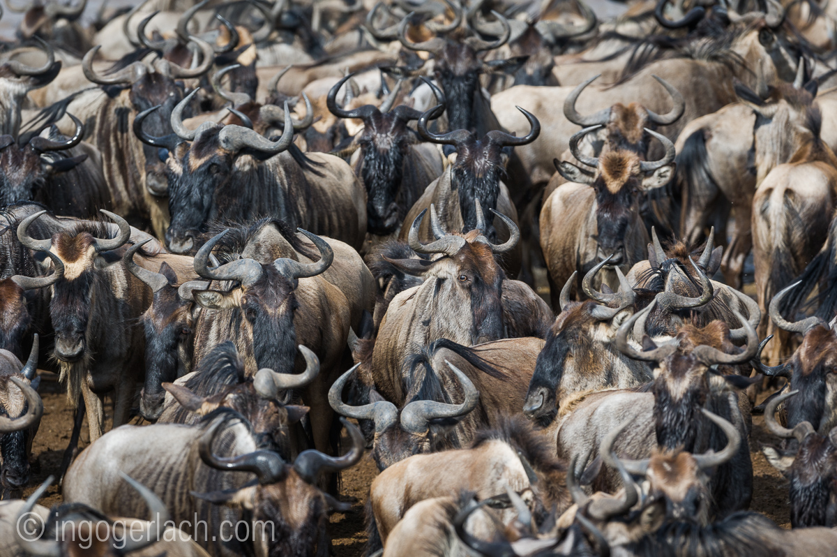 The great Migration_D3S2752