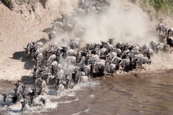 The great Migration_D3X6917