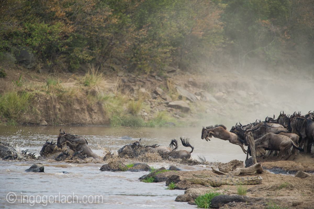 The great Migration_D3S3588