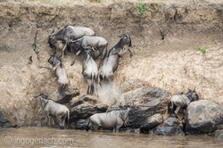 The great Migration_D3S3194