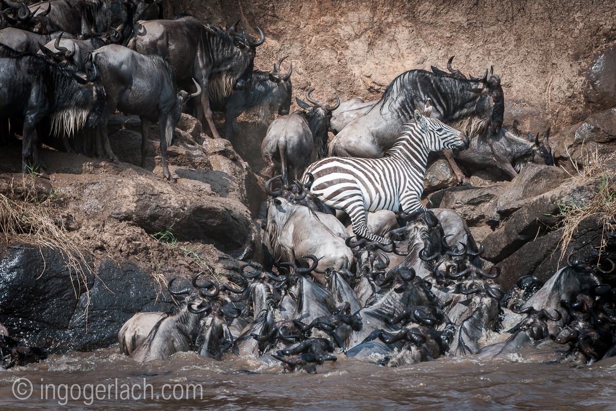 The great Migration_D3X7918
