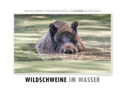 Kalender Wildschweine im Wasser
