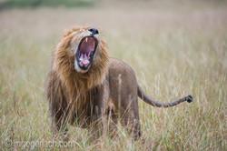 Löwen: Kampf der Giganten_D3S4016