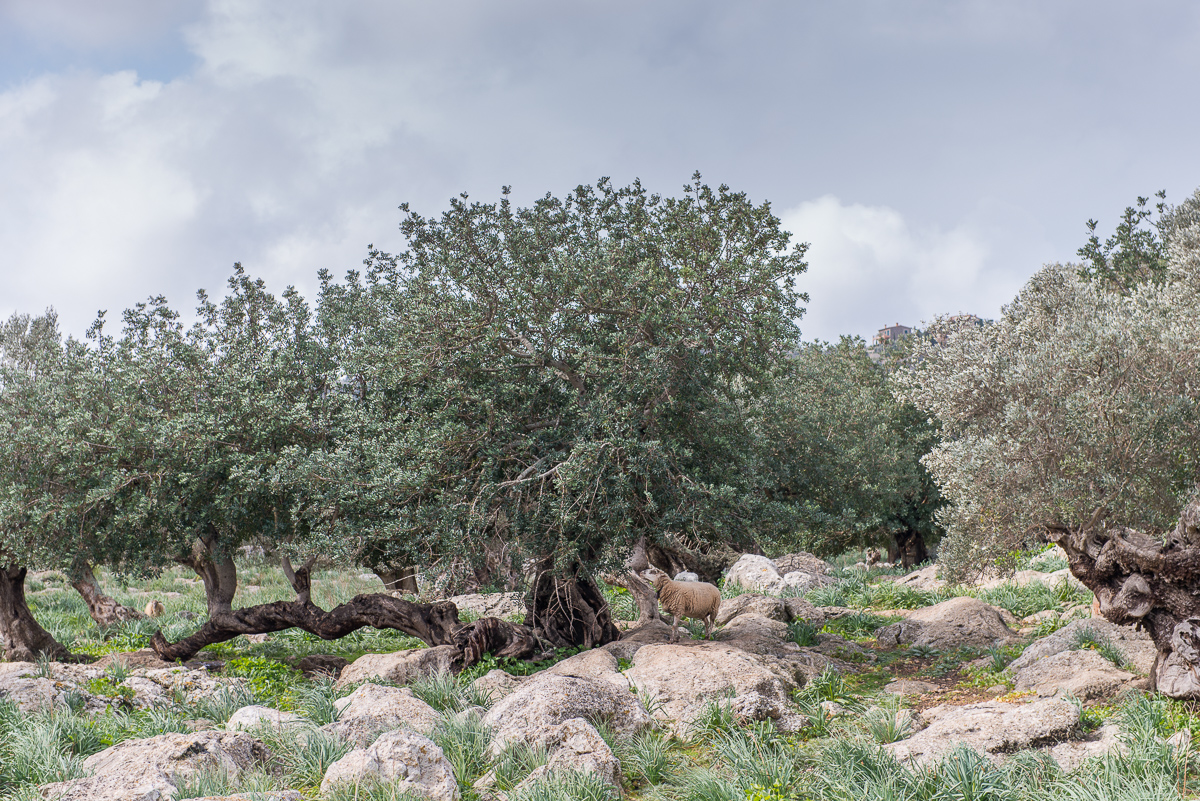 Mallorca © Ingo Gerlach_D8N2234