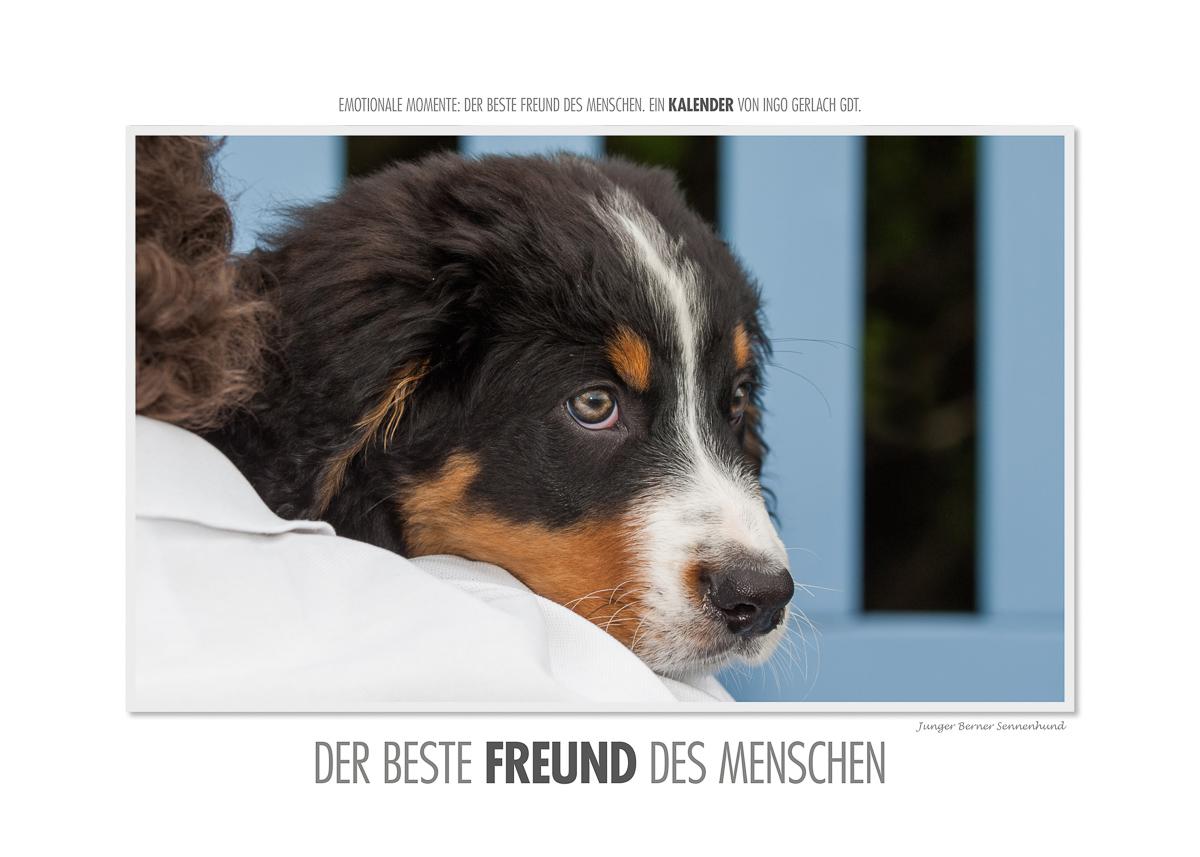 Kalender Bester Freund des Menschen