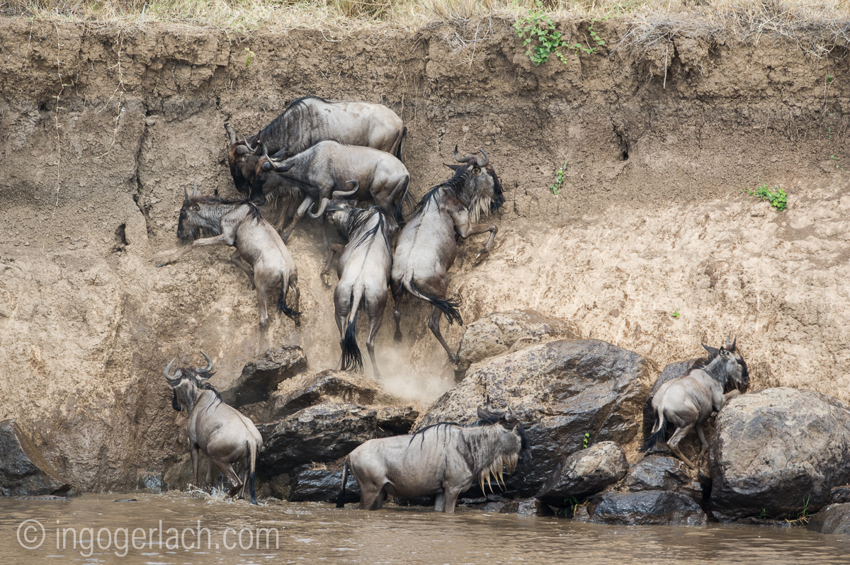 The great Migration_D3S3191