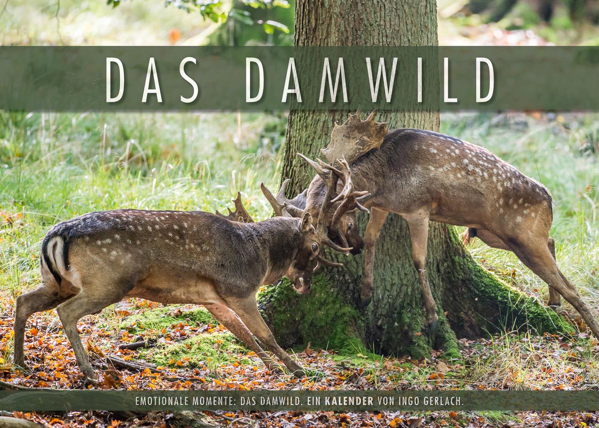 Kalender Damwild
