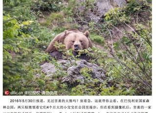 Bayerische Bären nach China exportiert...