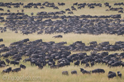 The great Migration_D3S8702