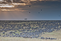 The great Migration_D3X7452