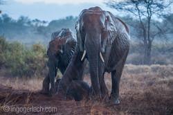 Elefanten im Regen_IGB7664