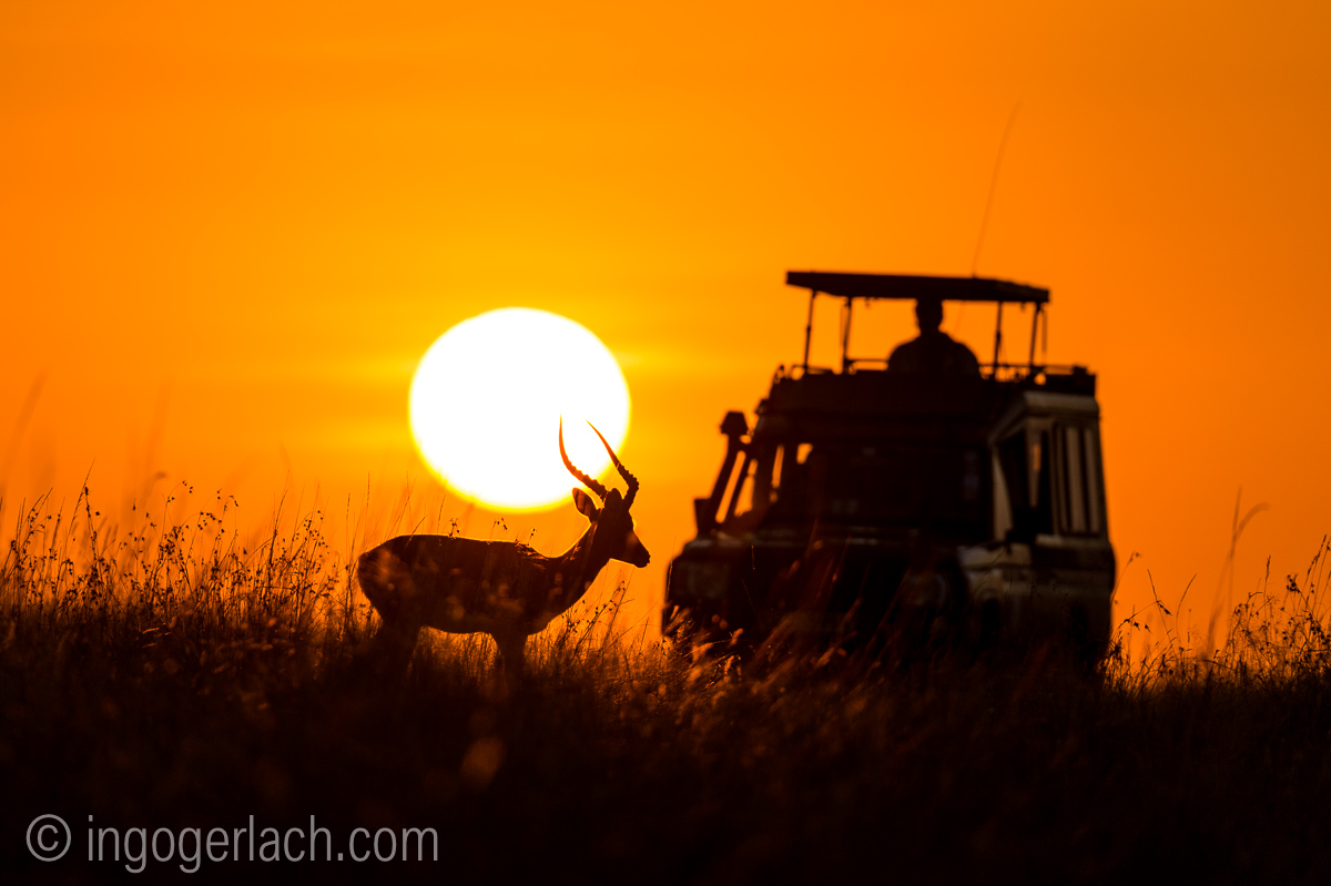 Impala at sunrise_D4N_2626