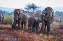 Elefanten im Regen_IGB7650
