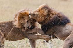 Löwen: Kampf der Giganten_D3X8135-2