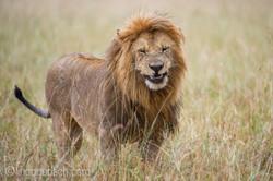 Löwen: Kampf der Giganten_D3S3966