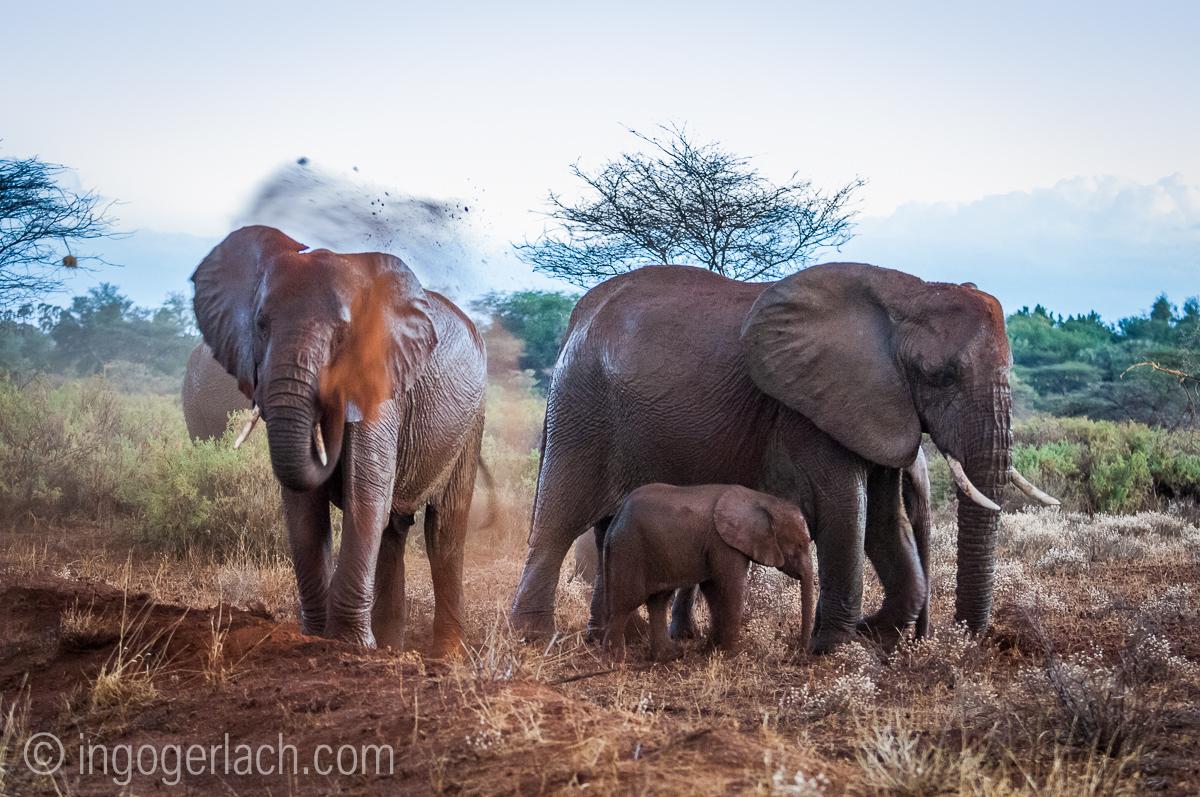 Elefanten im Regen_IGB7730