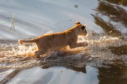 Der Mut der kleinen Löwen_IWG4479