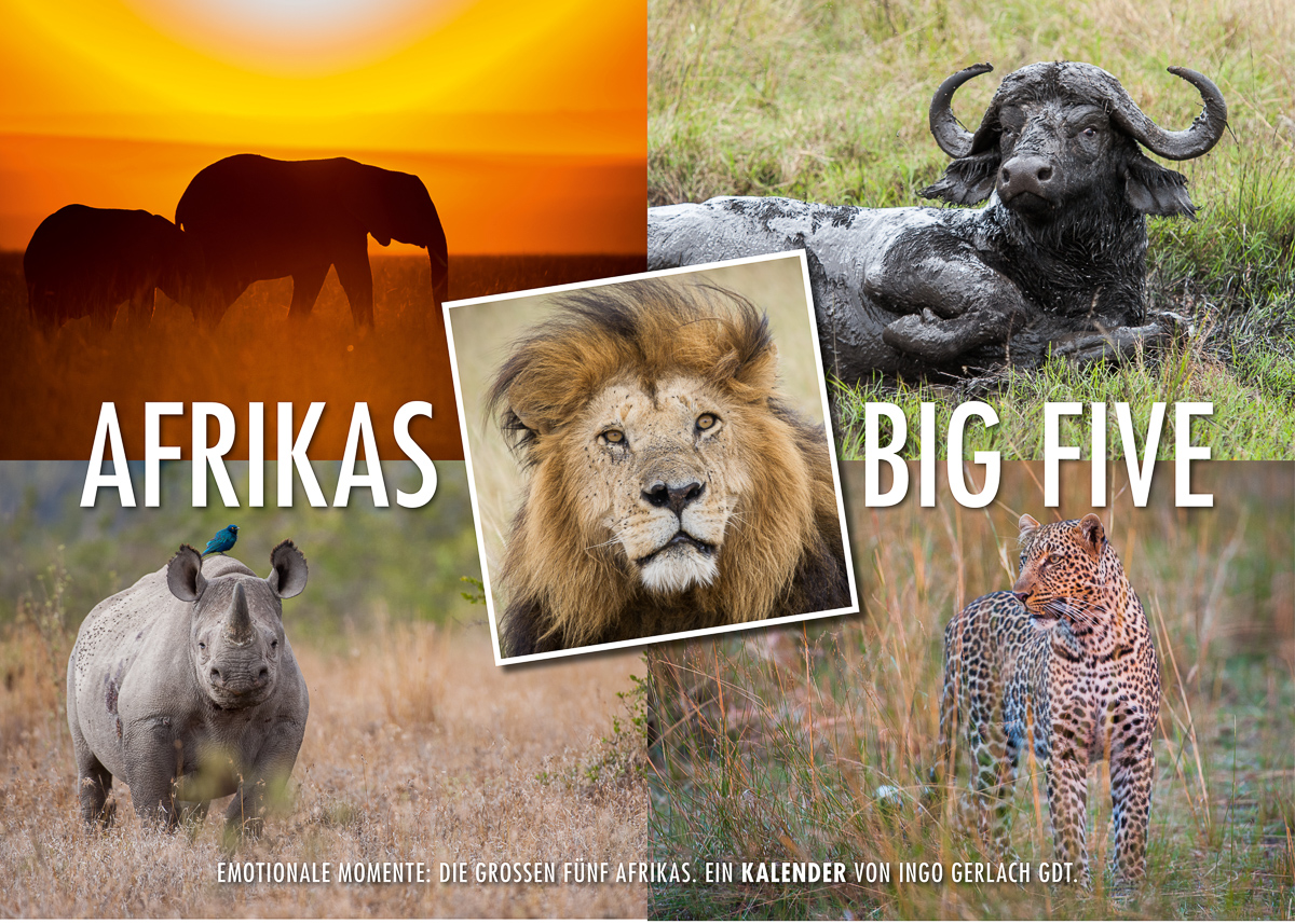 Kalender Afrikas Big Five