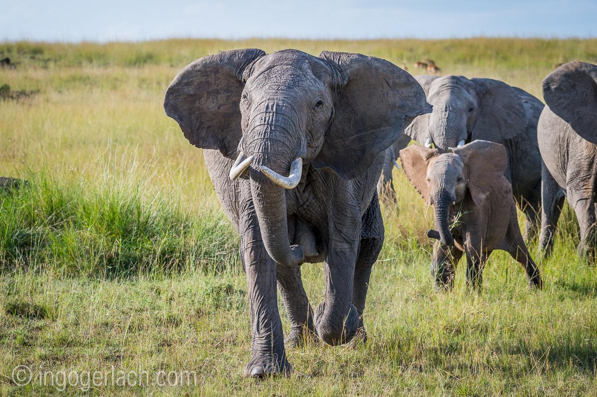 Elefanten_D4N_1537