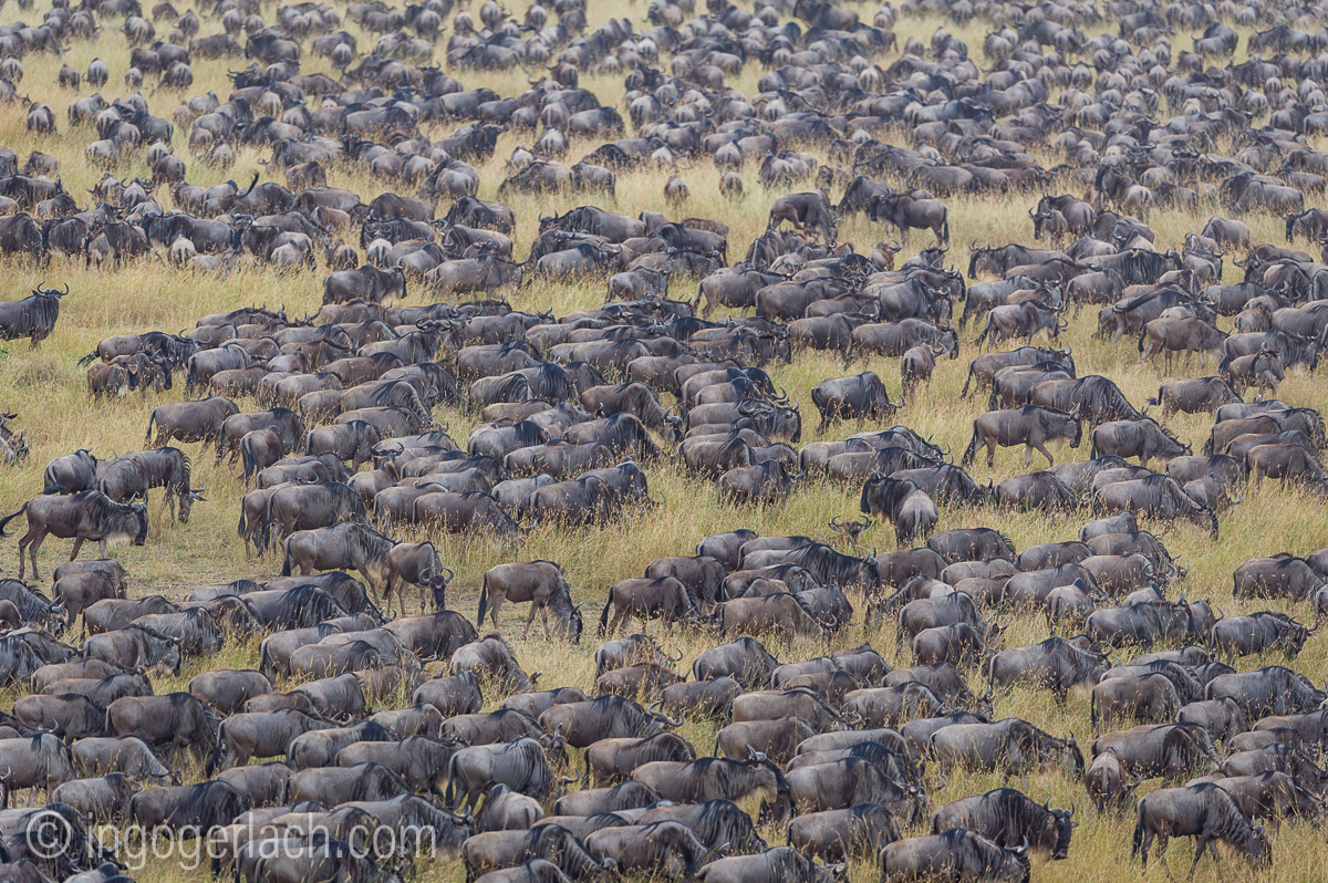 The great Migration_D3S0126