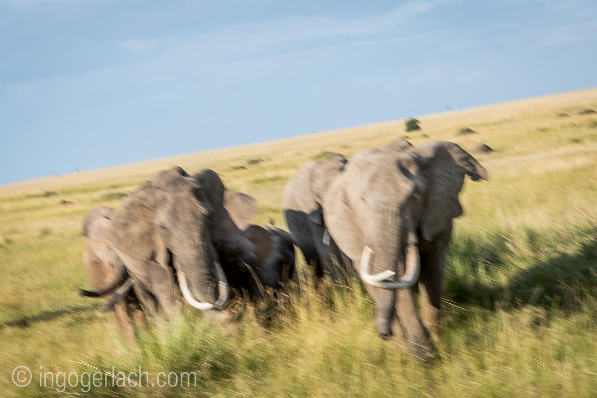 Elefanten_IG7_3550