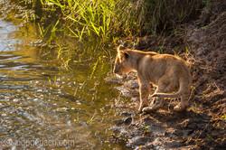 Der Mut der kleinen Löwen_IWG4483