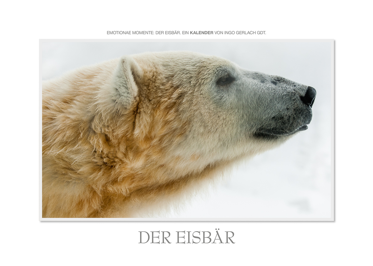 Kalender Der Eisbär