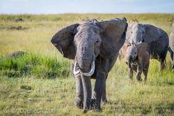 Elefanten_D4N_1542