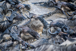 The great Migration_D3S8816