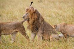 Löwen: Kampf der Giganten_D3S3946