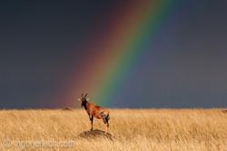 Over the Rainbow_Topi_IWG0021