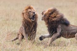 Löwen: Kampf der Giganten_D3X8138-2
