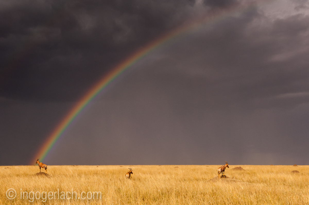 Over the Rainbow_Topi_IWG0028