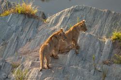 Der Mut der kleinen Löwen_IGB6518