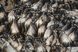 The great Migration_D3S2697
