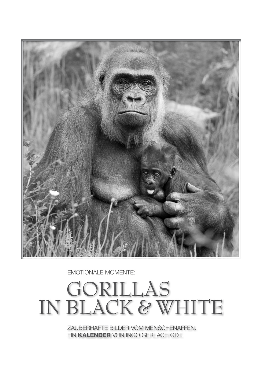 Kalender Gorillas