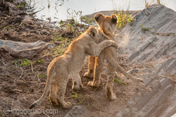 Der Mut der kleinen Löwen_IWG4453